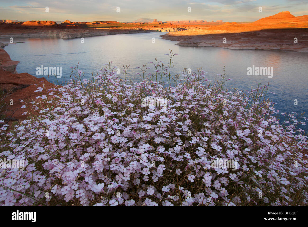 Lake Powell, Glen Canyon National Recreation Area, Arizona. Immagini Stock