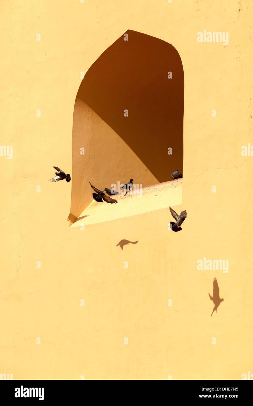 I piccioni e le ombre del wWindows od Jantar Mantar,Jaipur India Immagini Stock
