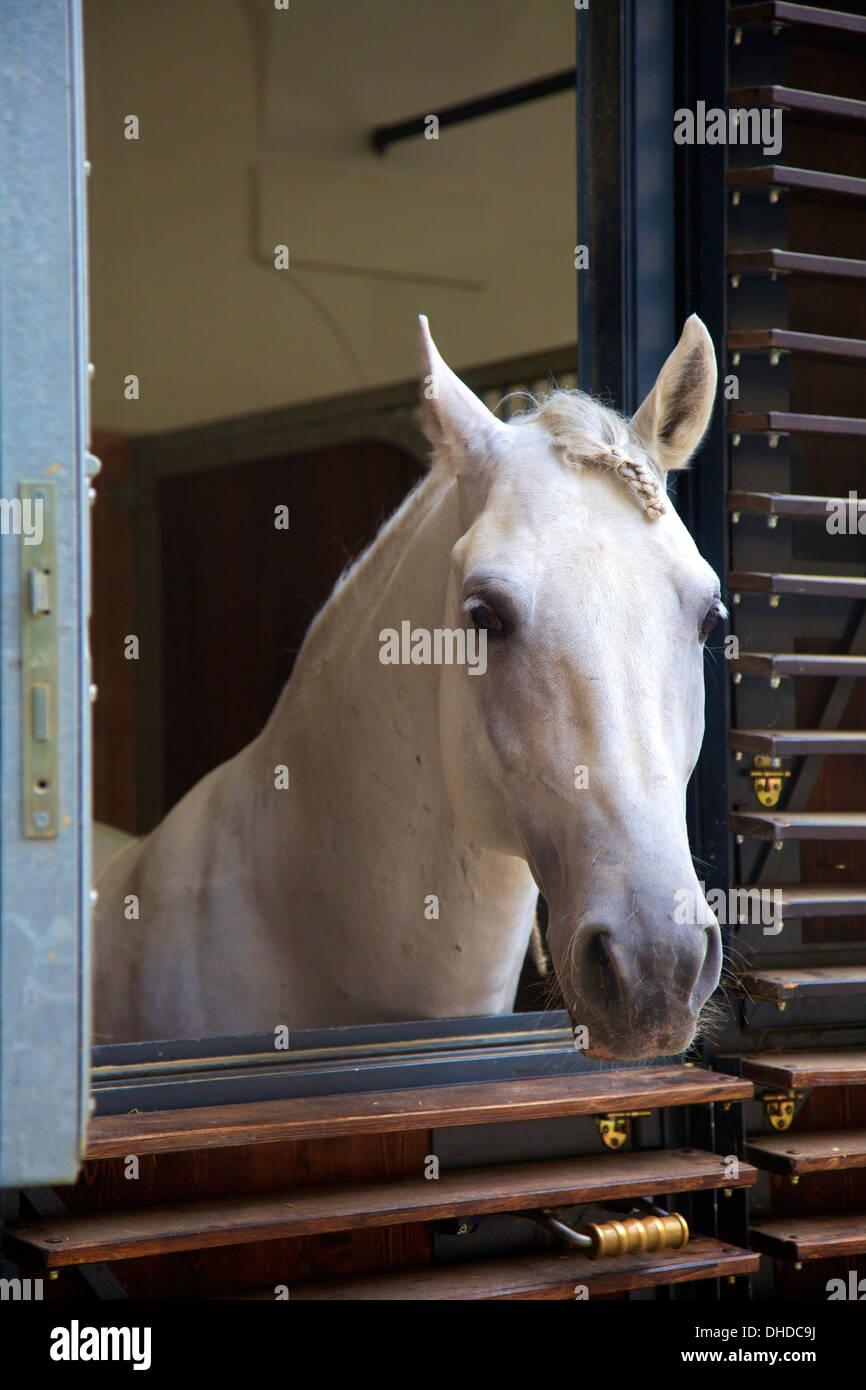 La Scuola Spagnola di equitazione maneggio, Vienna, Austria, Europa Immagini Stock