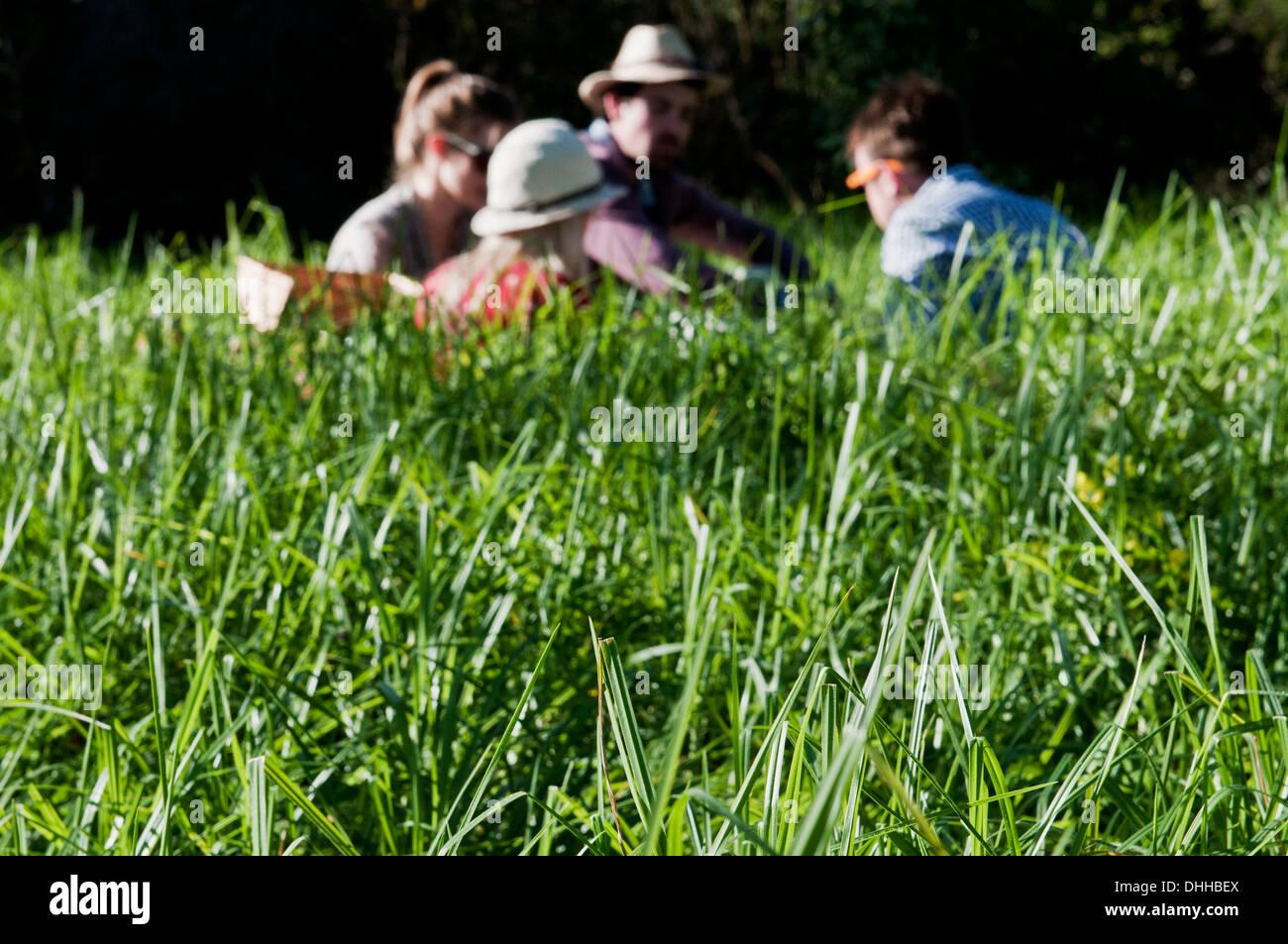 Gruppo di amici avente picnic in erba lunga Immagini Stock