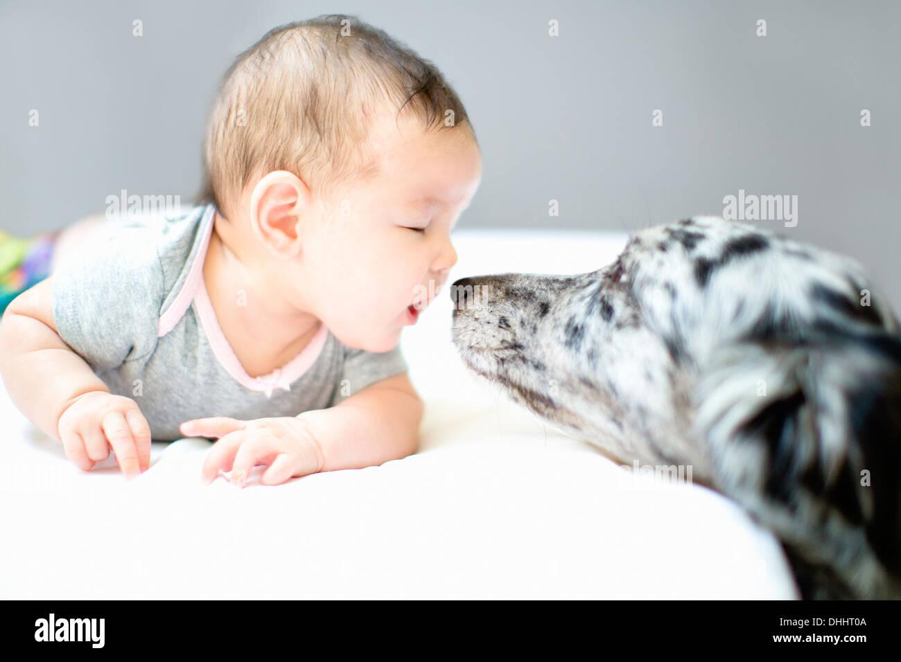 Baby girl faccia a faccia con il cane Immagini Stock