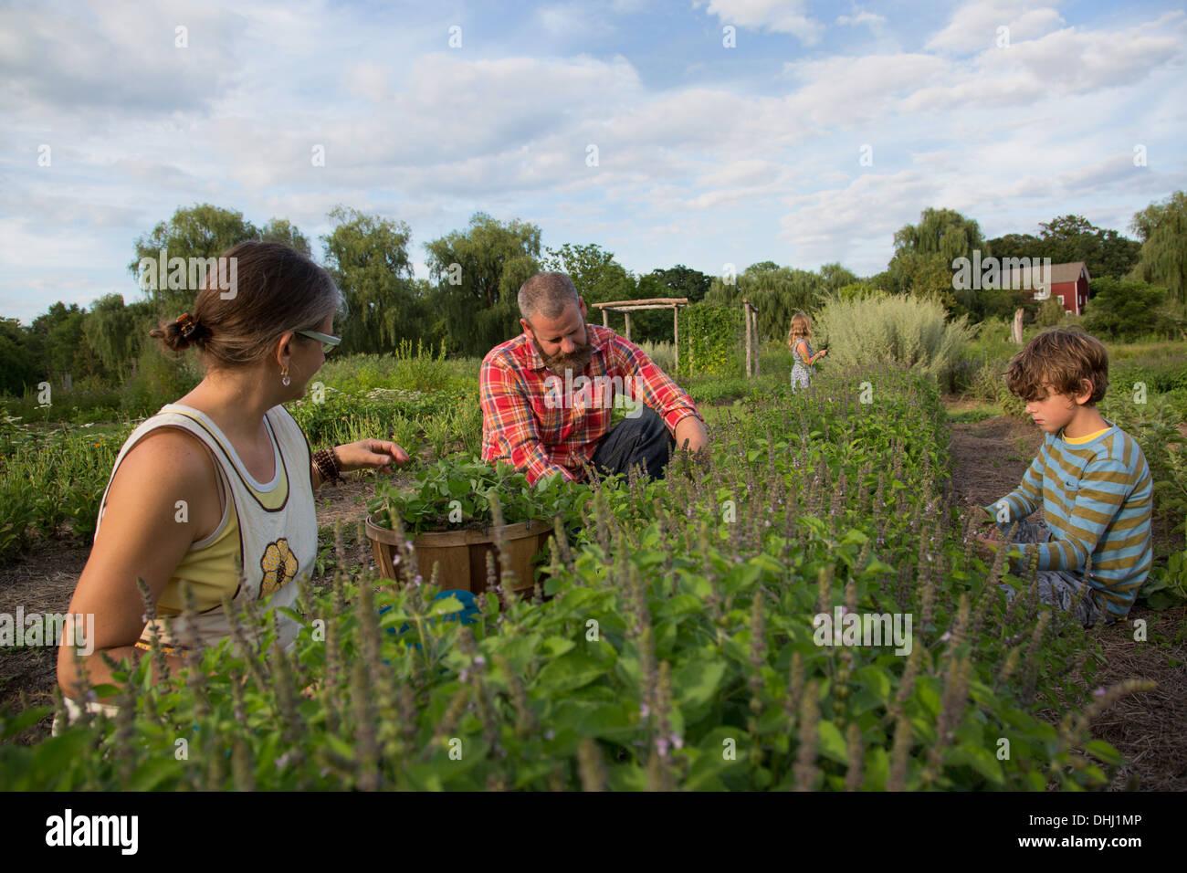 Famiglia lavorando insieme su herb farm Immagini Stock