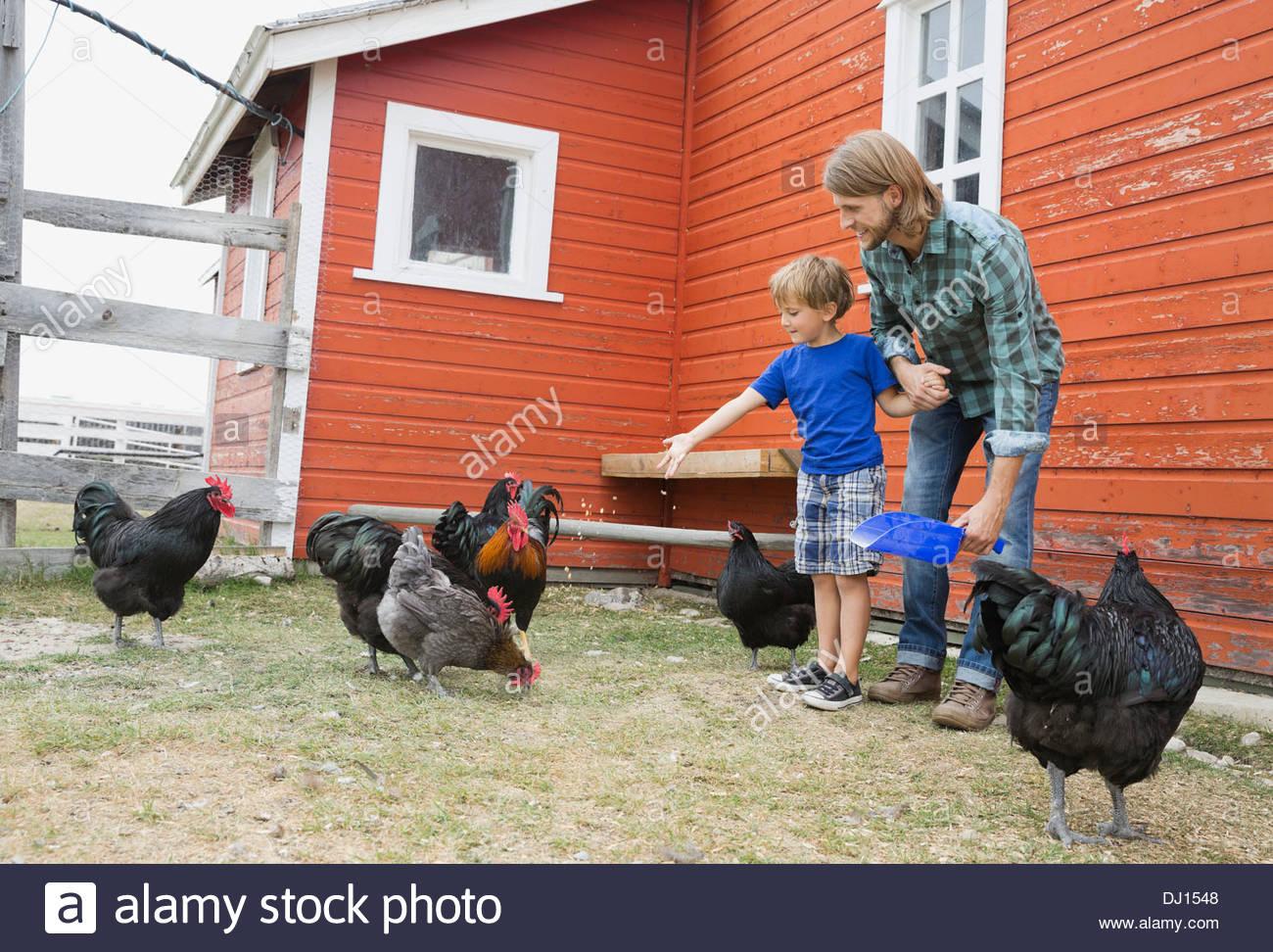 Padre e figlio alimentazione di polli in agriturismo Immagini Stock
