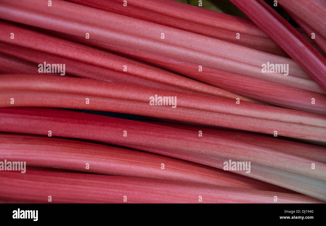 Rabarbaro rosa Immagini Stock
