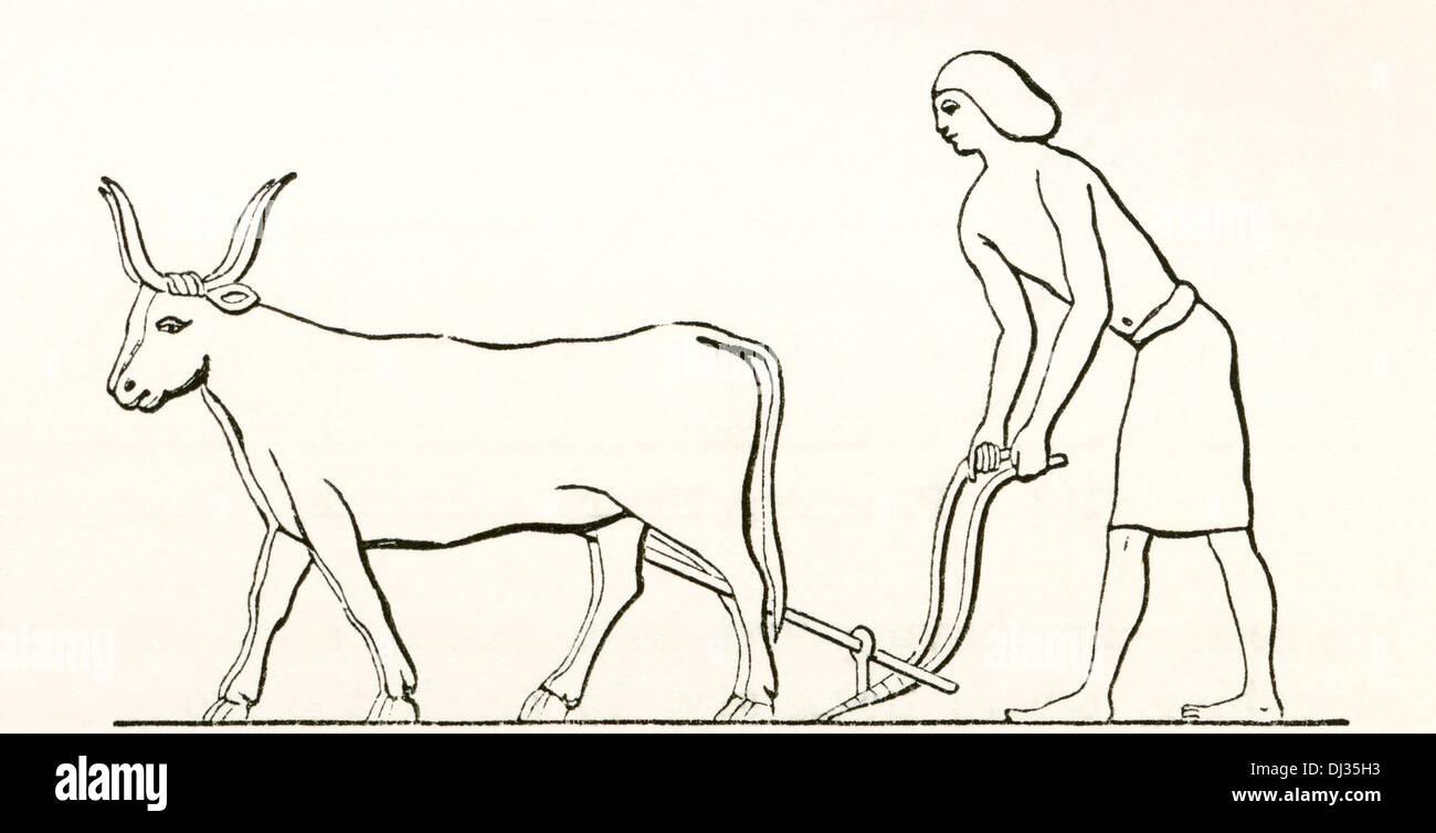L'aratura con buoi nell'antico Egitto. Foto Stock