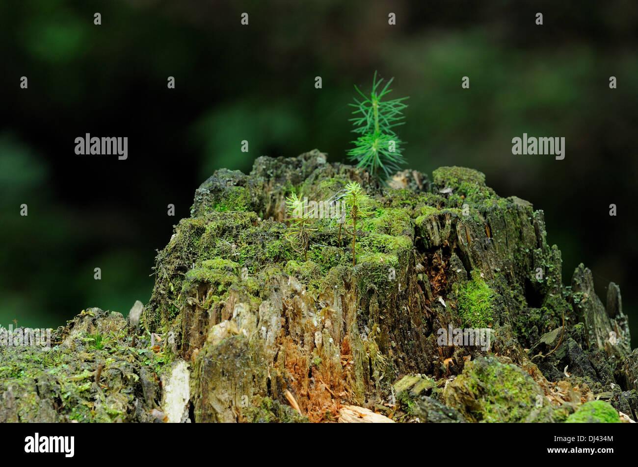 Il microcosmo forest floor Immagini Stock