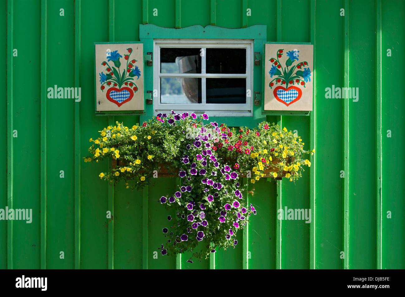 Fioriere Per Persiane ~ Finestra con persiane colorate e fioriera sul verde baita in legno