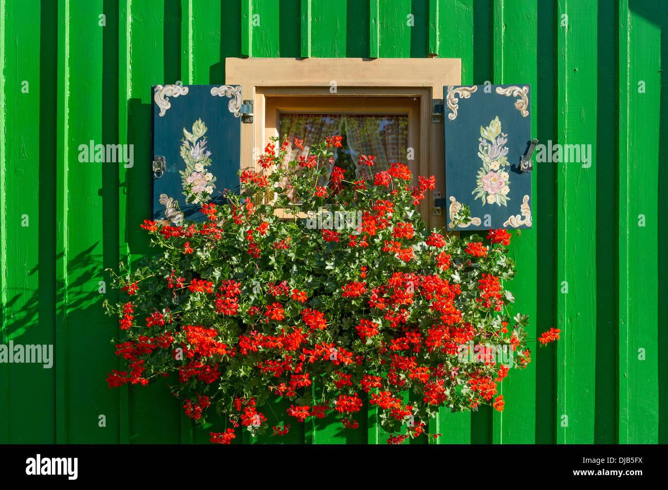 Fioriere Per Persiane ~ Finestra con persiane colorate e fioriera con gerani pelargonium