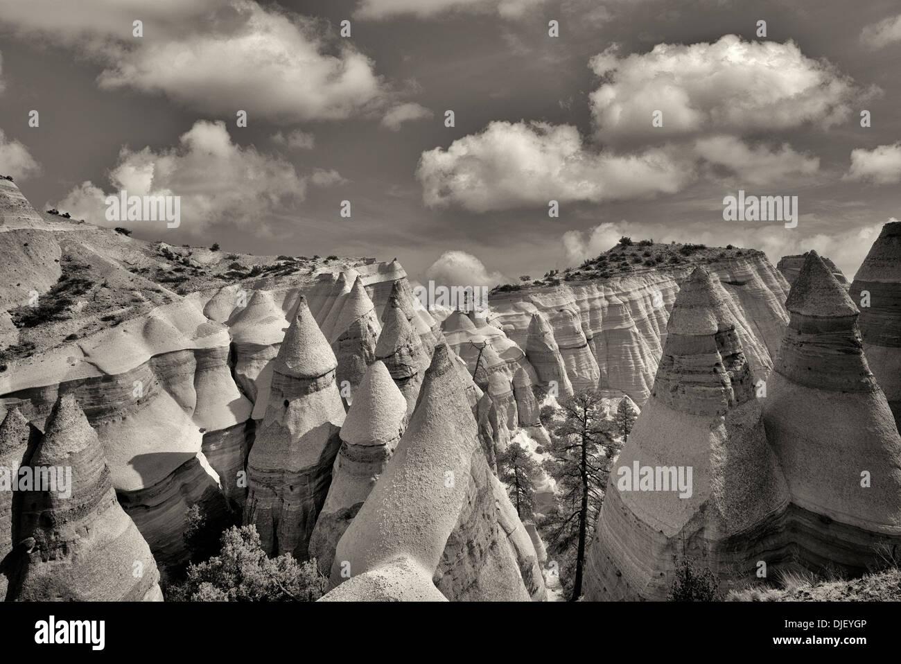 Le formazioni rocciose e lottando ponderosa pine tree in tenda Rocks National Monument, Nuovo Messico. Immagini Stock