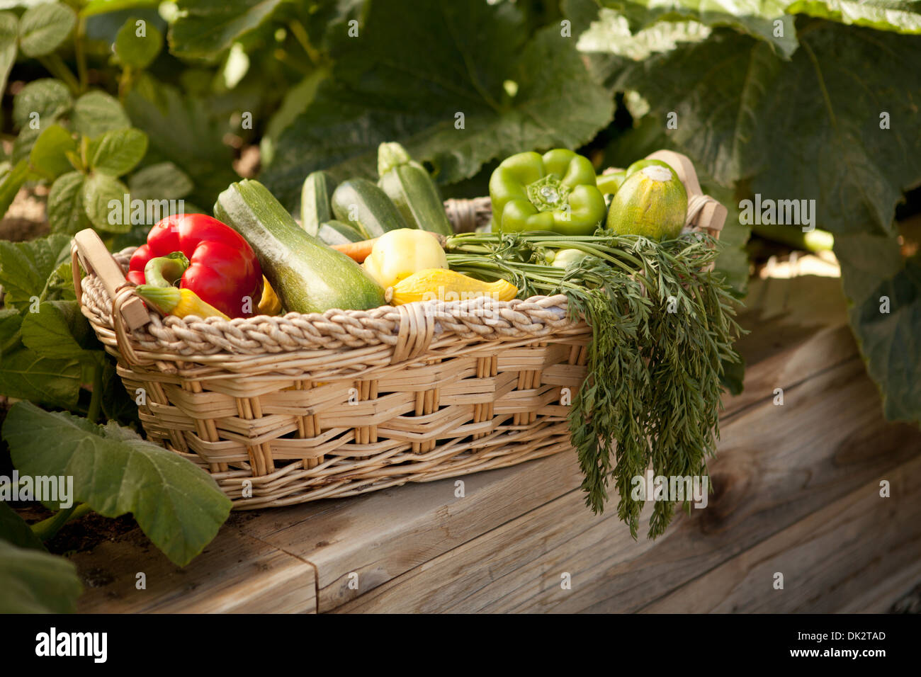 Varietà di Organici ortaggi raccolti nel cestello in un orto Immagini Stock
