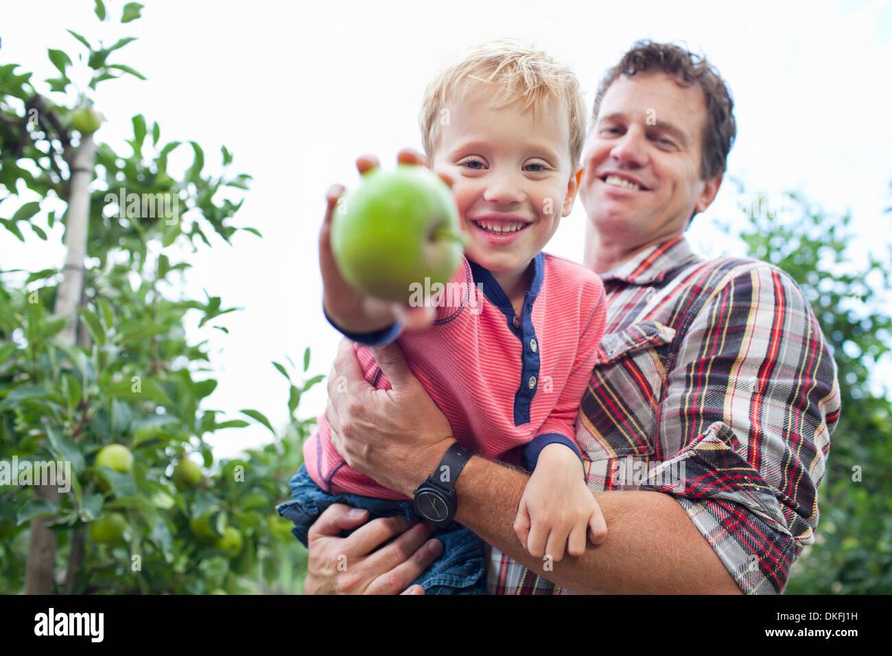 L'agricoltore e figlio la raccolta di mele da albero in Orchard Immagini Stock