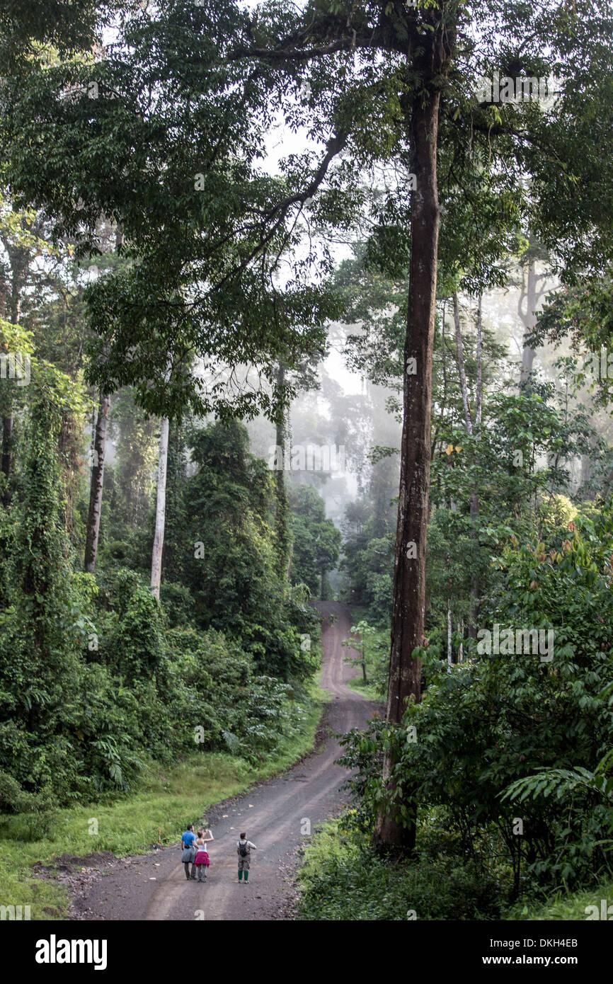 Una guida accompagna i turisti in un inizio di mattina escursione nella valle di Danum, Sabah Malaysian Borneo, Malaysia, Asia sud-orientale, Asia Immagini Stock