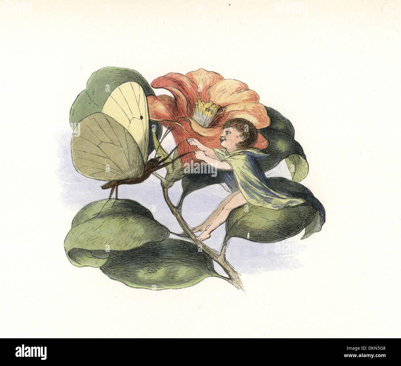 Fata e butterfly danza su un fiore di camelie, Camellia japonica. Immagini Stock
