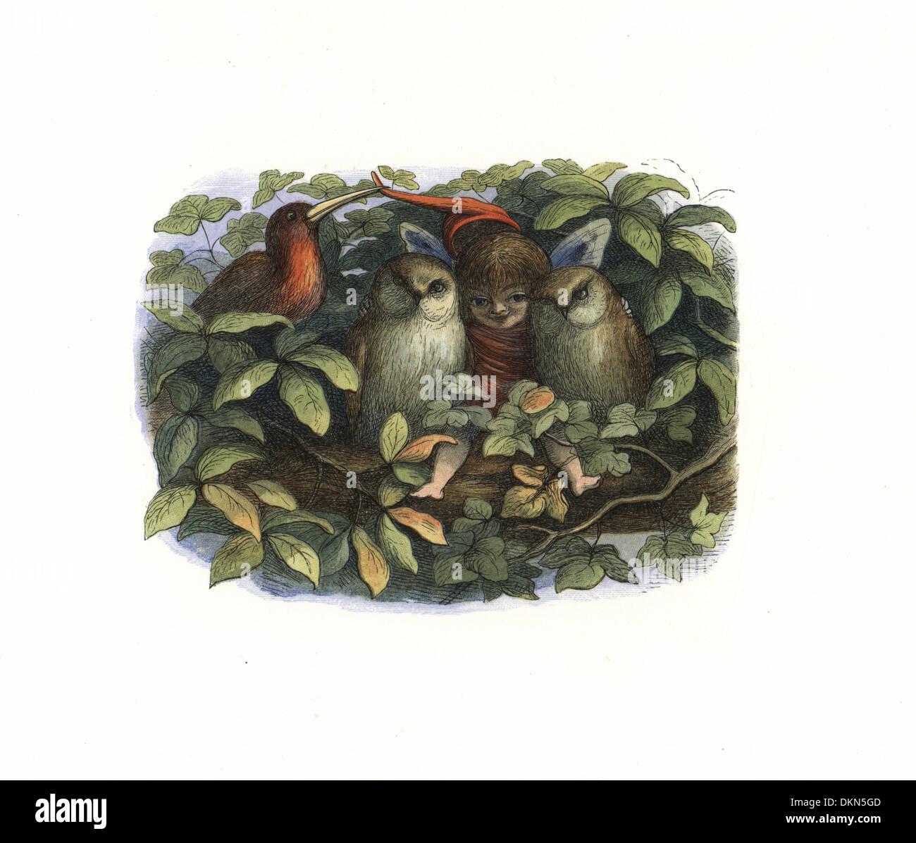Elf e gufi su un albero di fronda. Immagini Stock