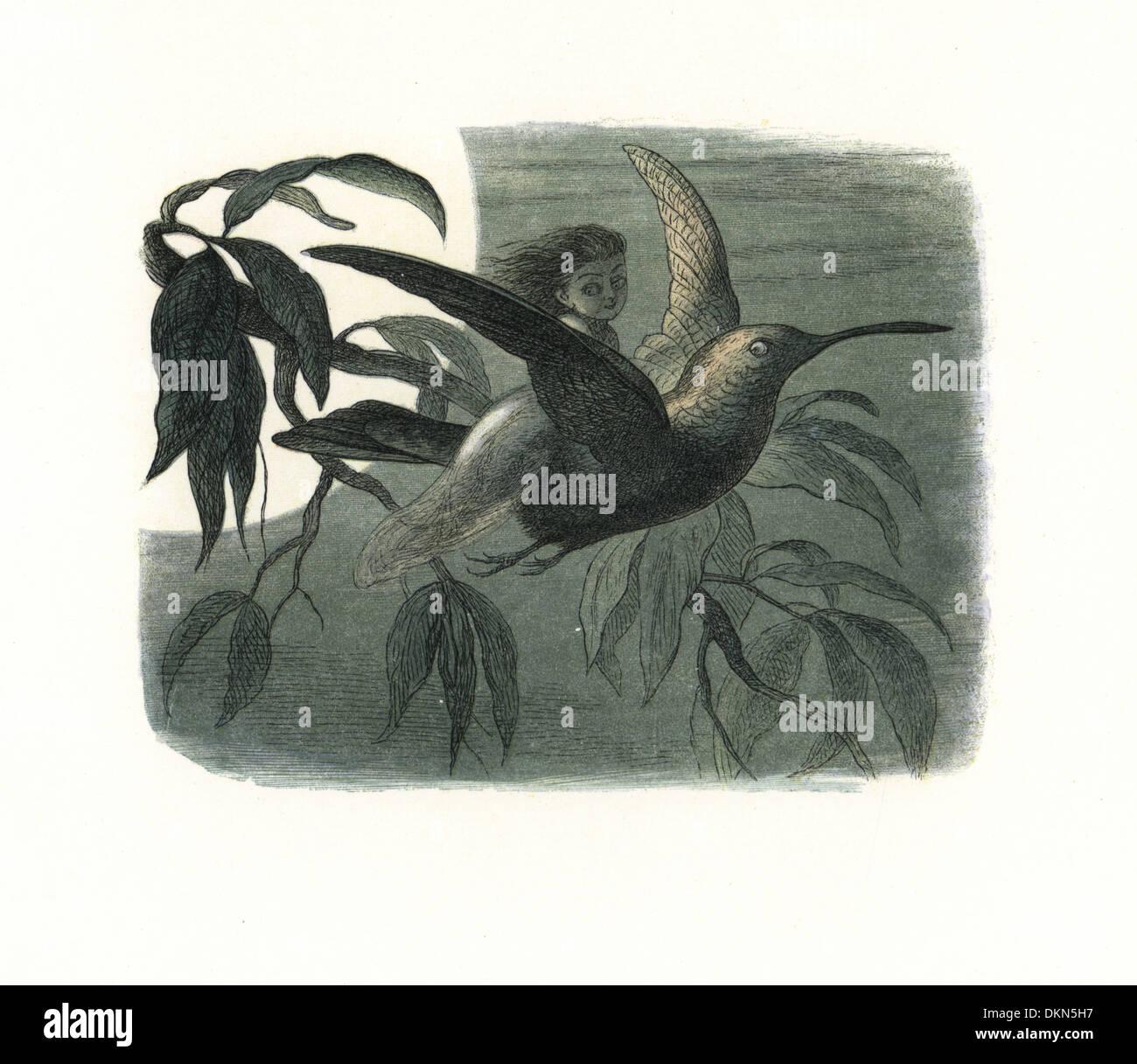 Fairy messenger a cavallo di un colibrì al chiaro di luna. Immagini Stock