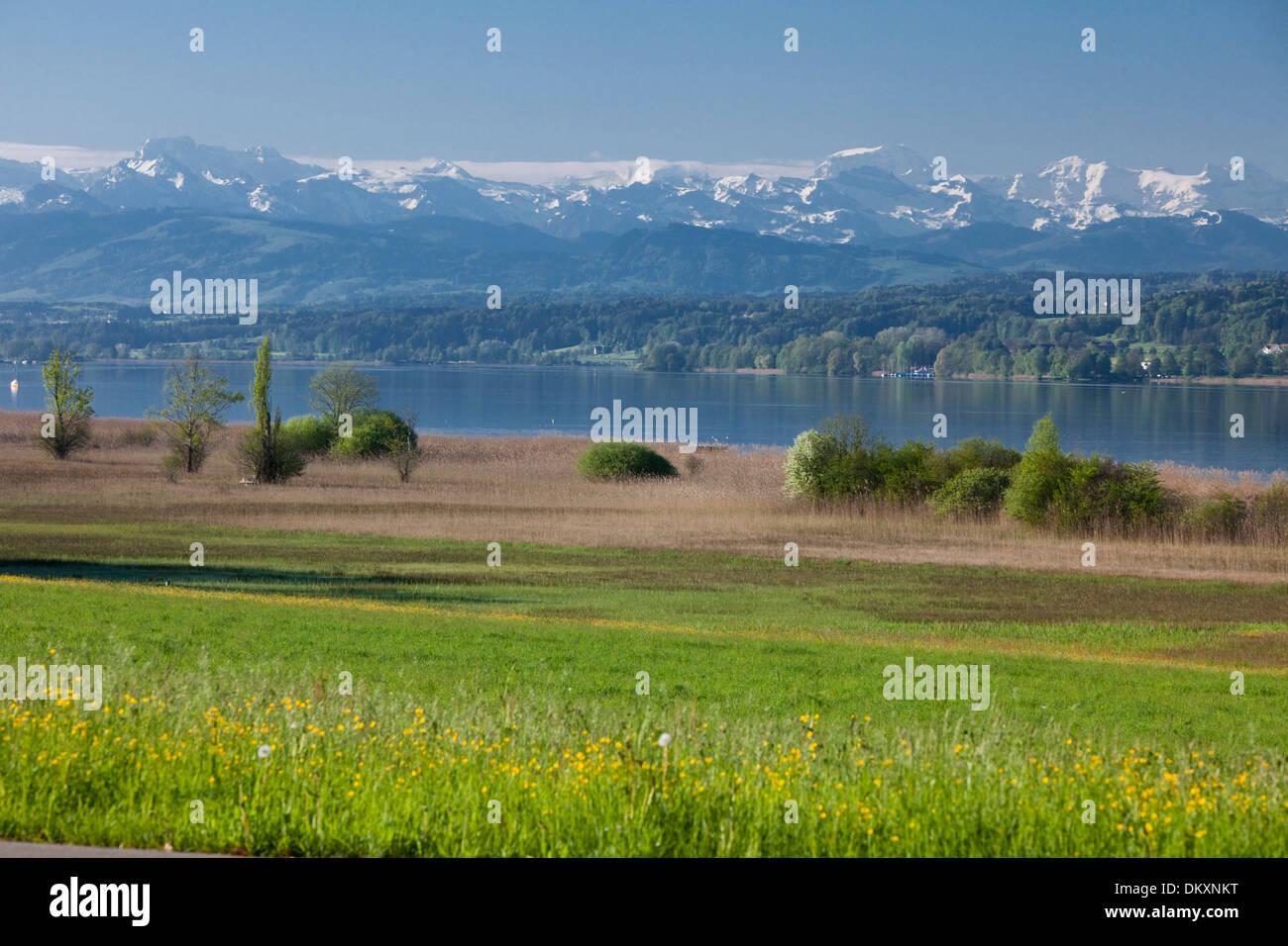 La Svizzera, Europa, lago, nave, barca, navi, barche, Alpi, Canton, ZH, Zurigo, molla, Greifensee, Lago di Greifen, prato, Immagini Stock