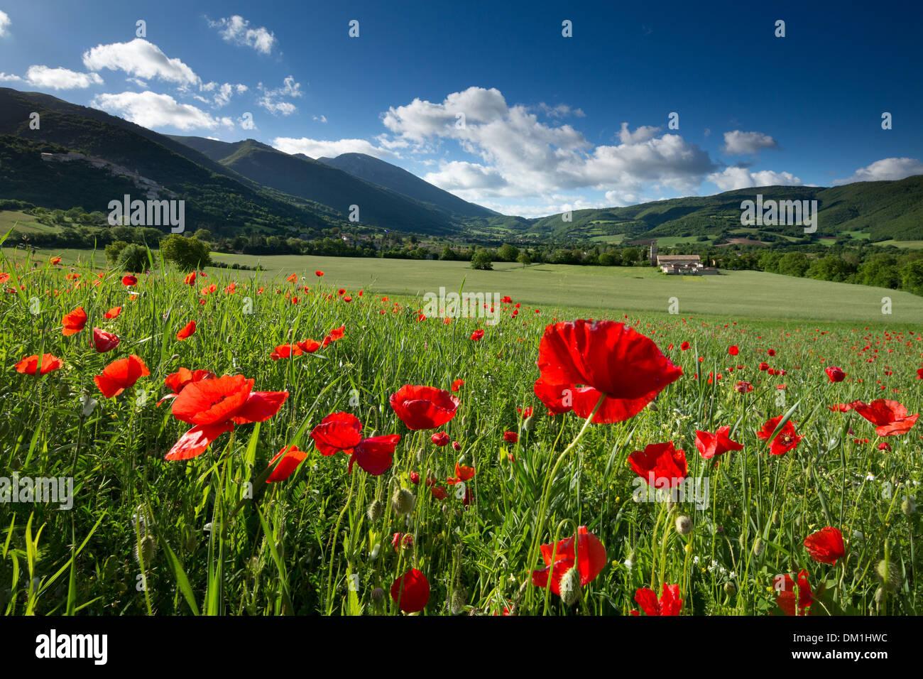 Campo nr Campi, Umbria, Italia Immagini Stock