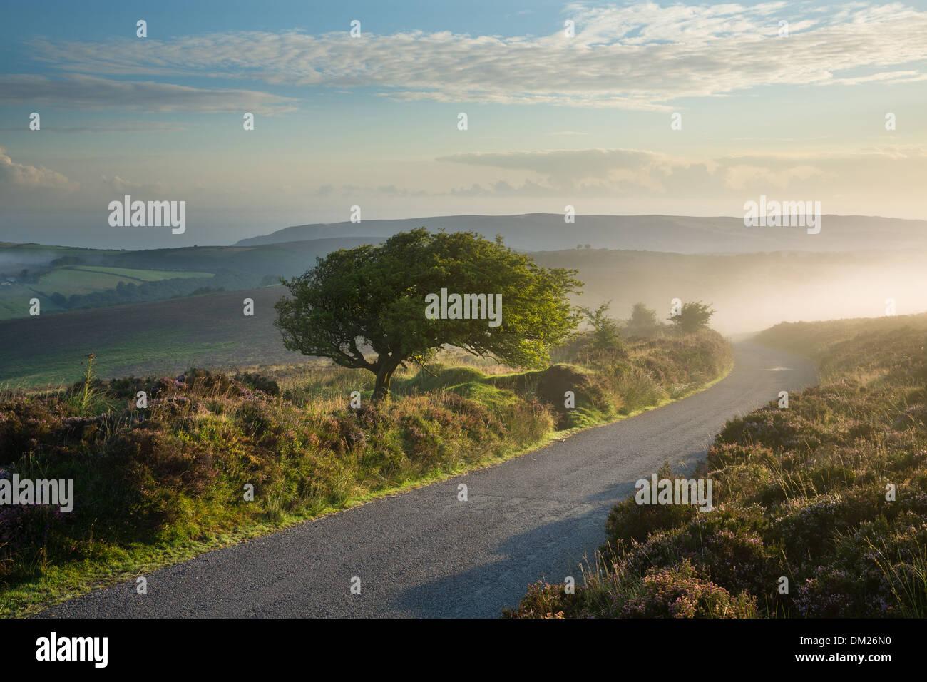 La strada sopra Stoke Pero comune, Dunkery Hill, Parco Nazionale di Exmoor, Somerset, Inghilterra, Regno Unito Immagini Stock