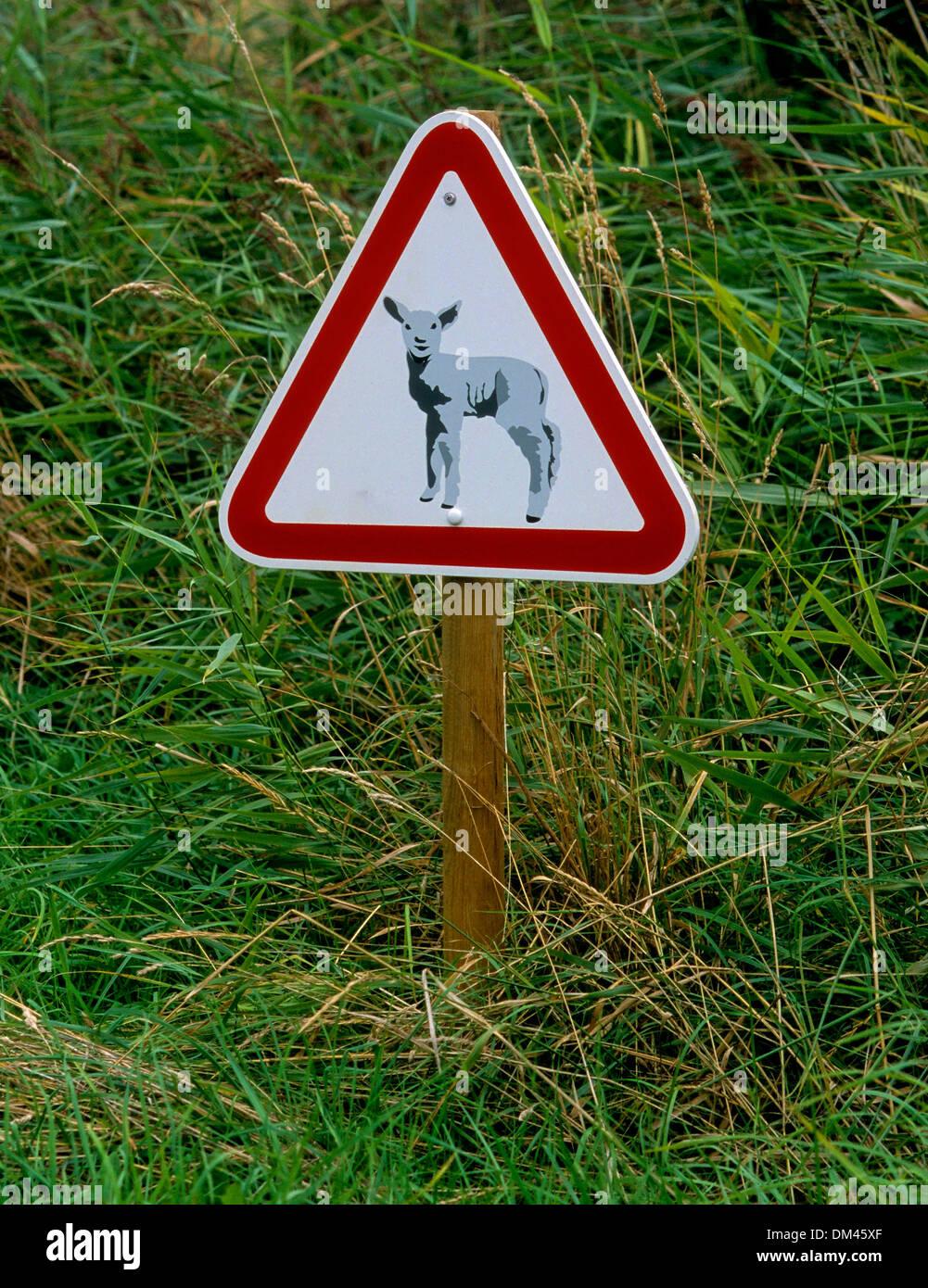 Segno: Attenzione pecora!, Schild: Achtung Schafe! Immagini Stock