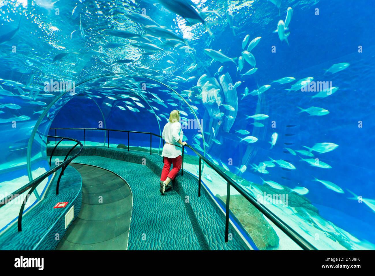 Turista femminile a Shanghai ocean Aquarium, Repubblica Popolare Cinese, PRC, Asia Immagini Stock
