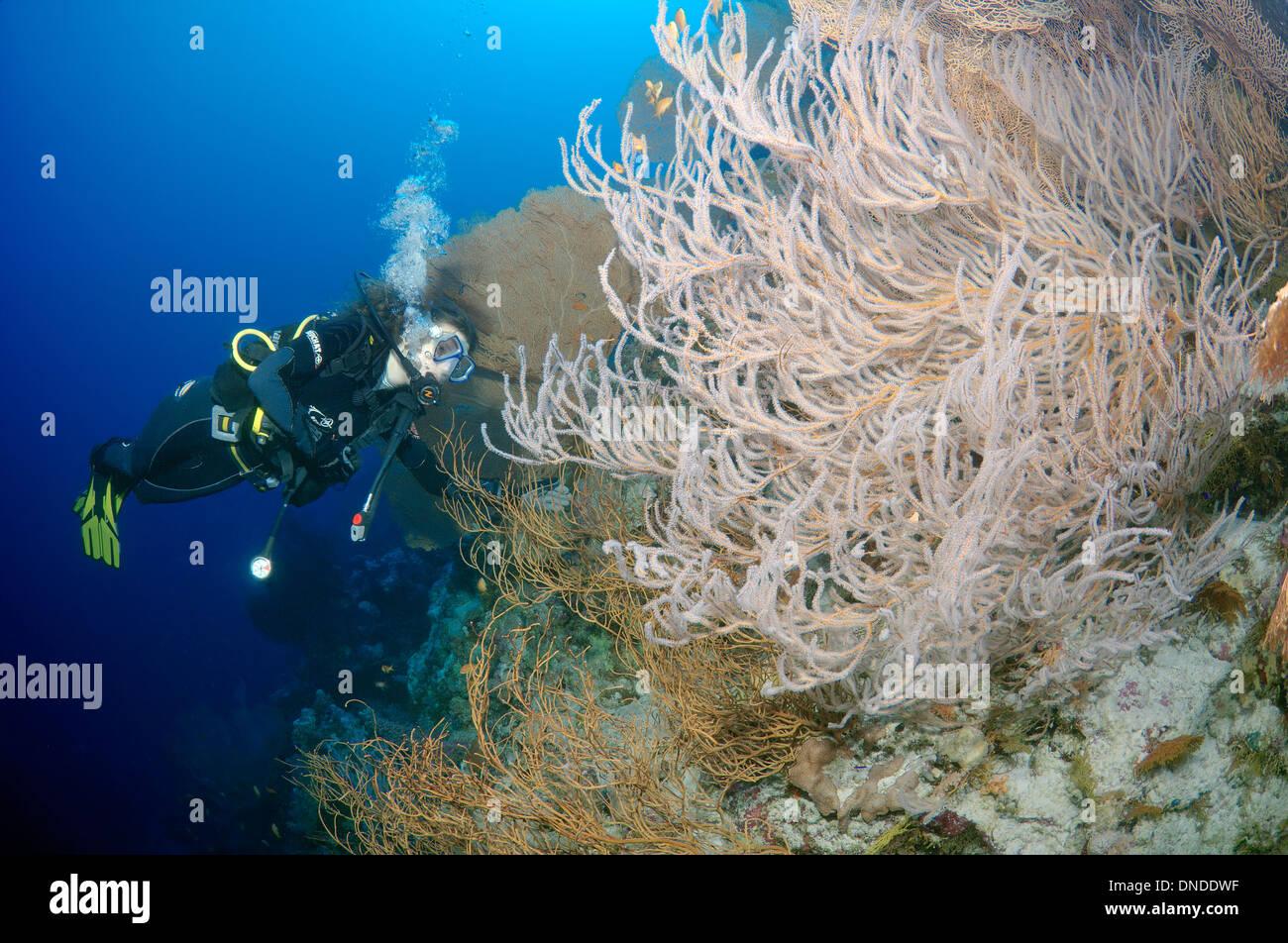 Sommozzatore guardando alla barriera corallina. Mar Rosso, Egitto, Africa Immagini Stock