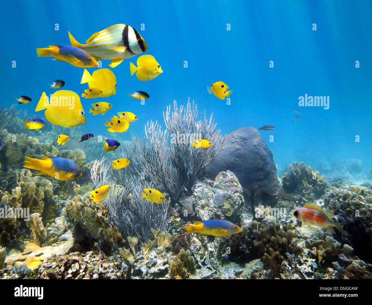 Underwater Coral reef scenario con colorati scuola di pesce Immagini Stock
