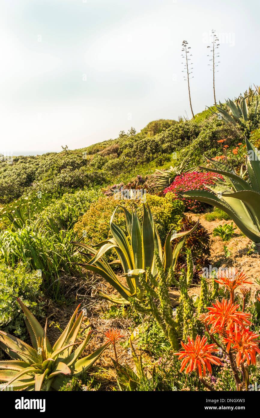 Tipica vegetazione nella zona costiera della _ Parque natural do sudoeste alentejano e costa vicentina_ natura park, costa vice Immagini Stock