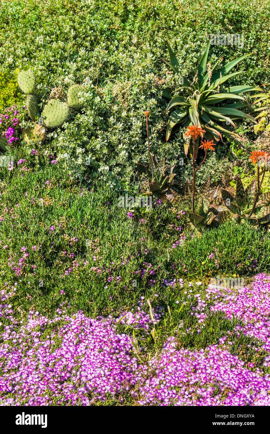 Tipica vegetazione nella zona costiera della _ Parque natural do sudoeste alentejano e costa vicentina_ natura park Immagini Stock