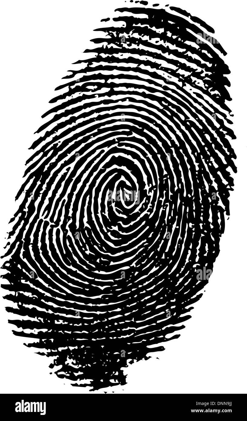 Impronte digitali dettagliate Immagini Stock