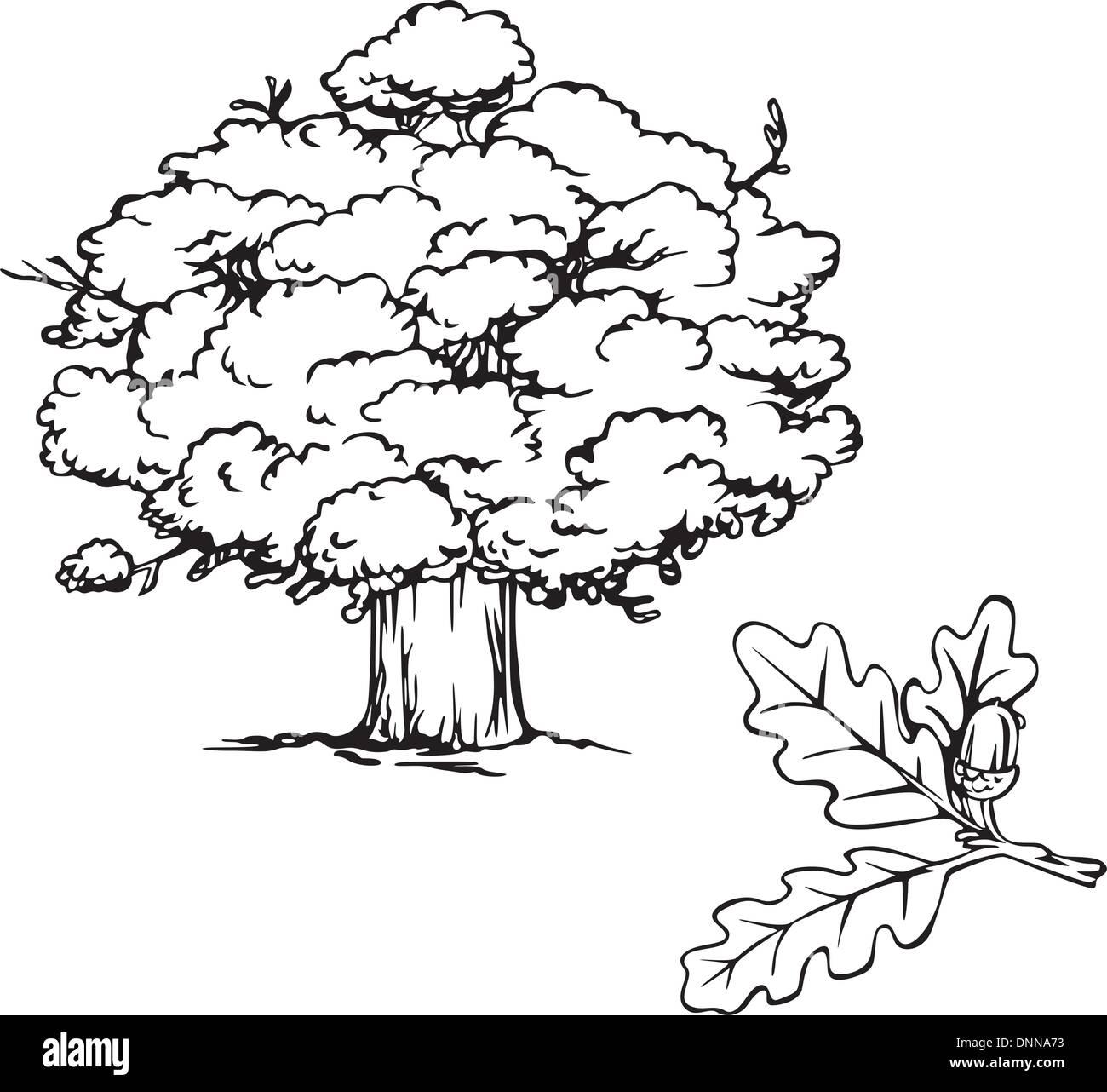 Albero di quercia e il ramo con acorn. Bianco e nero illustrazione vettoriale. Immagini Stock