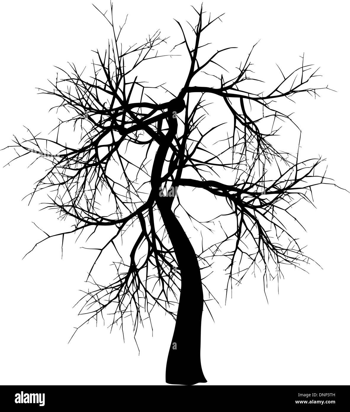 Silhouette di un albero di inverno Immagini Stock