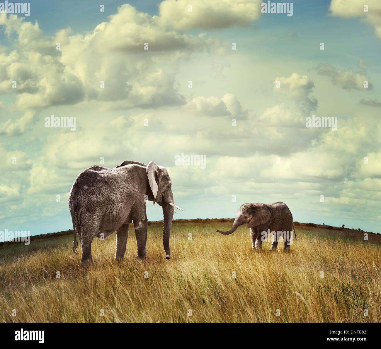 I giovani dell' elefante africano con la madre Immagini Stock