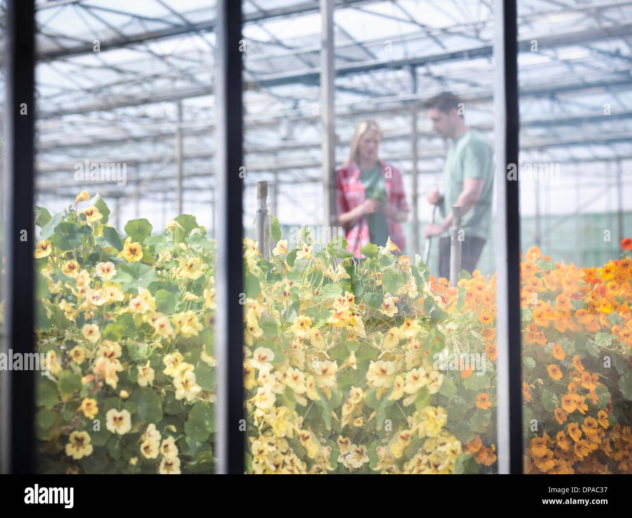 I lavoratori agricoli discutendo in serra Immagini Stock