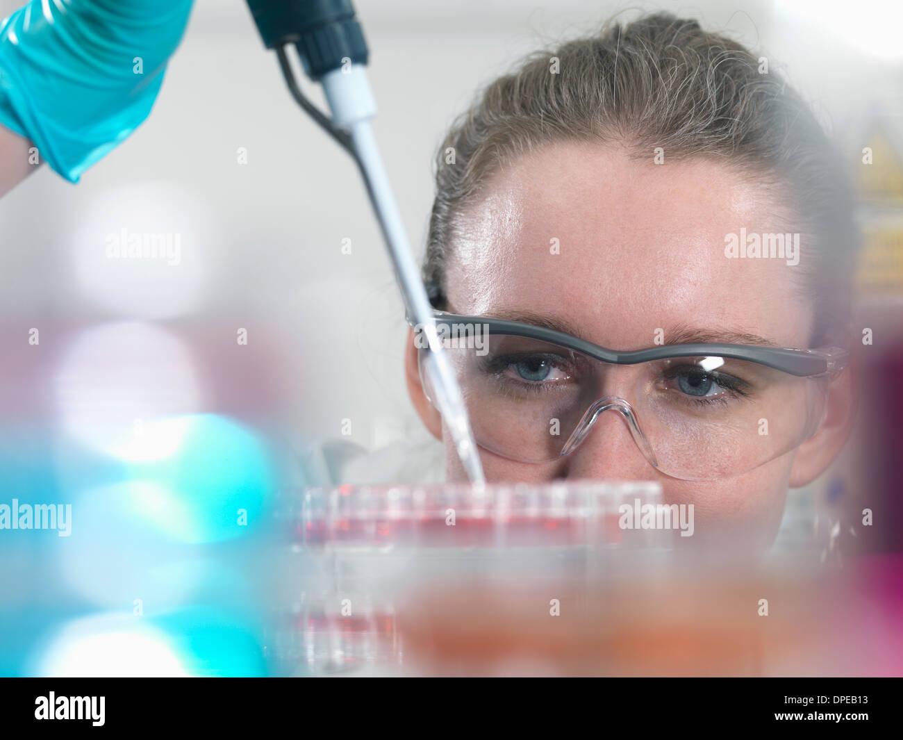 Scienziato di pipettaggio di cellule staminali culture nel vassoio per la ricerca farmaceutica Immagini Stock