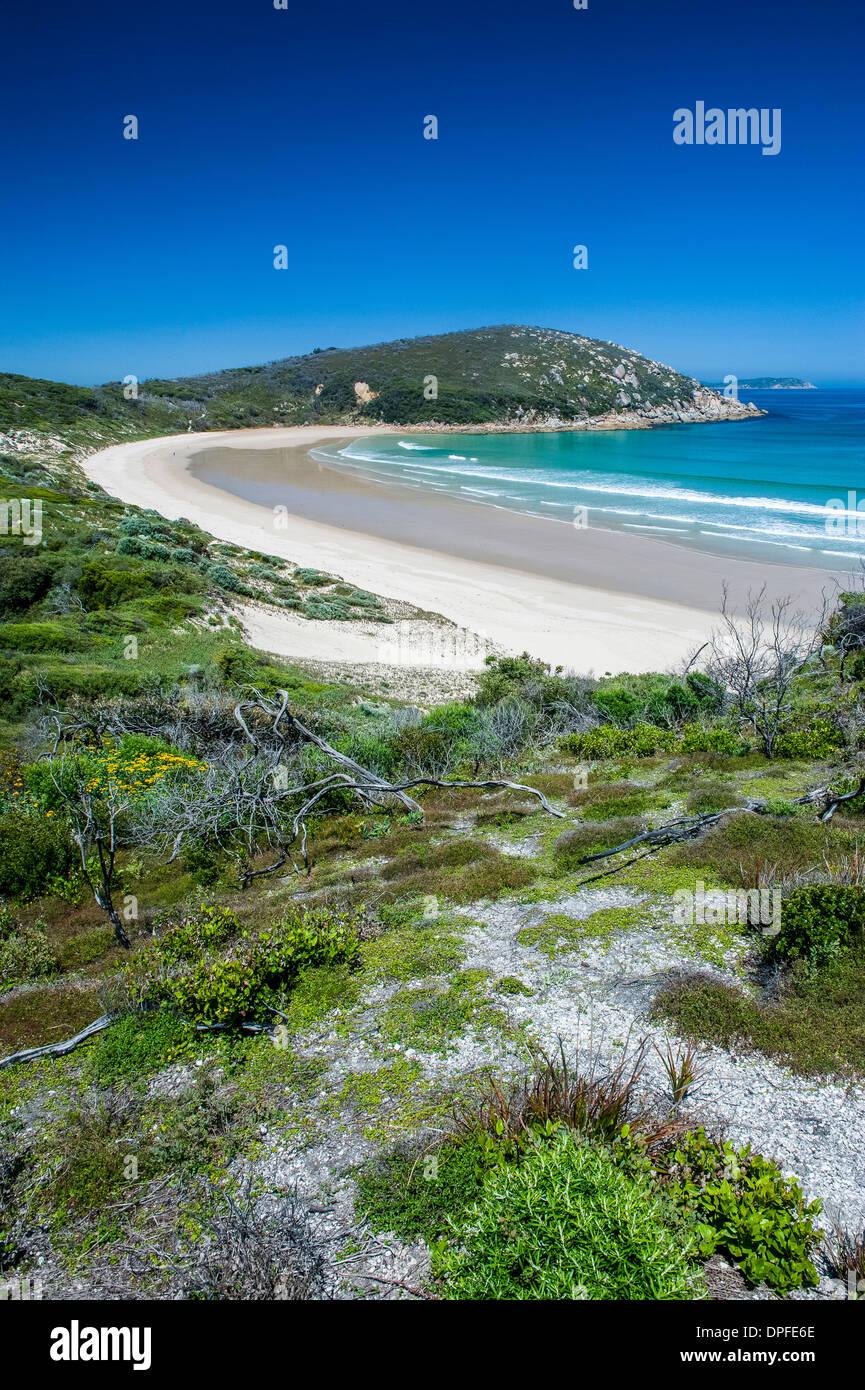 Lunga vasta spiaggia di sabbia nel Wilsons Promontory National Park, Victoria, Australia Pacific Immagini Stock