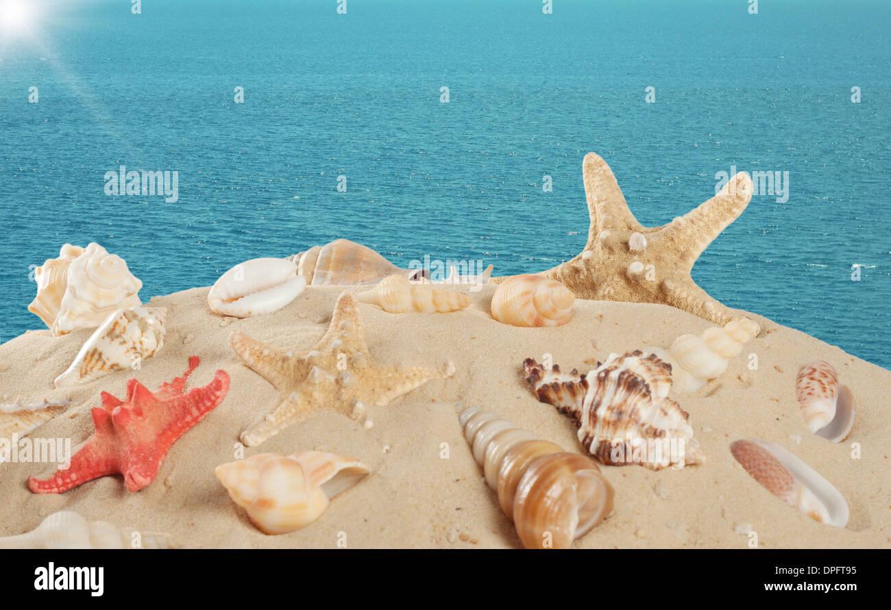 Stella Di Mare E Conchiglie Sulla Spiaggia Sabbiosa Di Sfondo Del