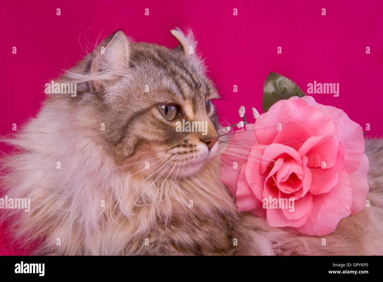 Nero rosa micio chiudere su