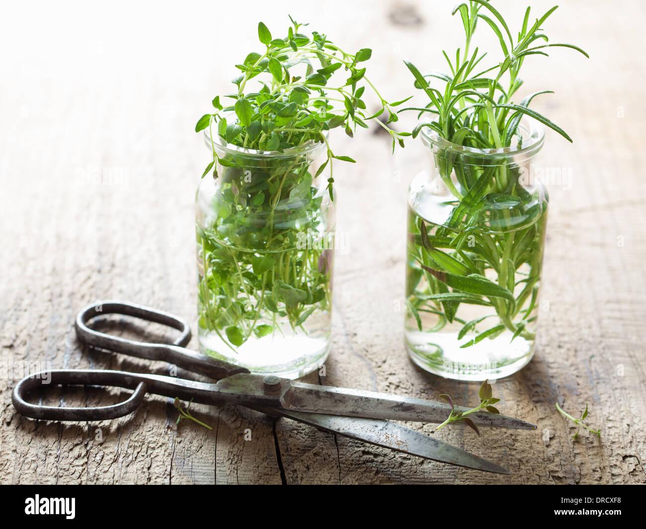 Di timo fresco e rosmarino erbe in vetro Immagini Stock
