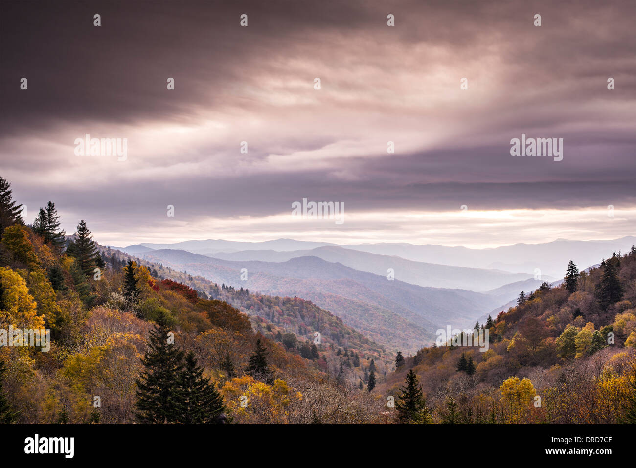 Smoky Mountains National Park in un nebbioso mattino d'autunno. Immagini Stock