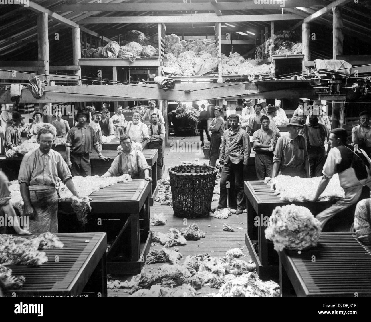 La lana di ordinamento e di classificazione, Burrawang, Australia Immagini Stock