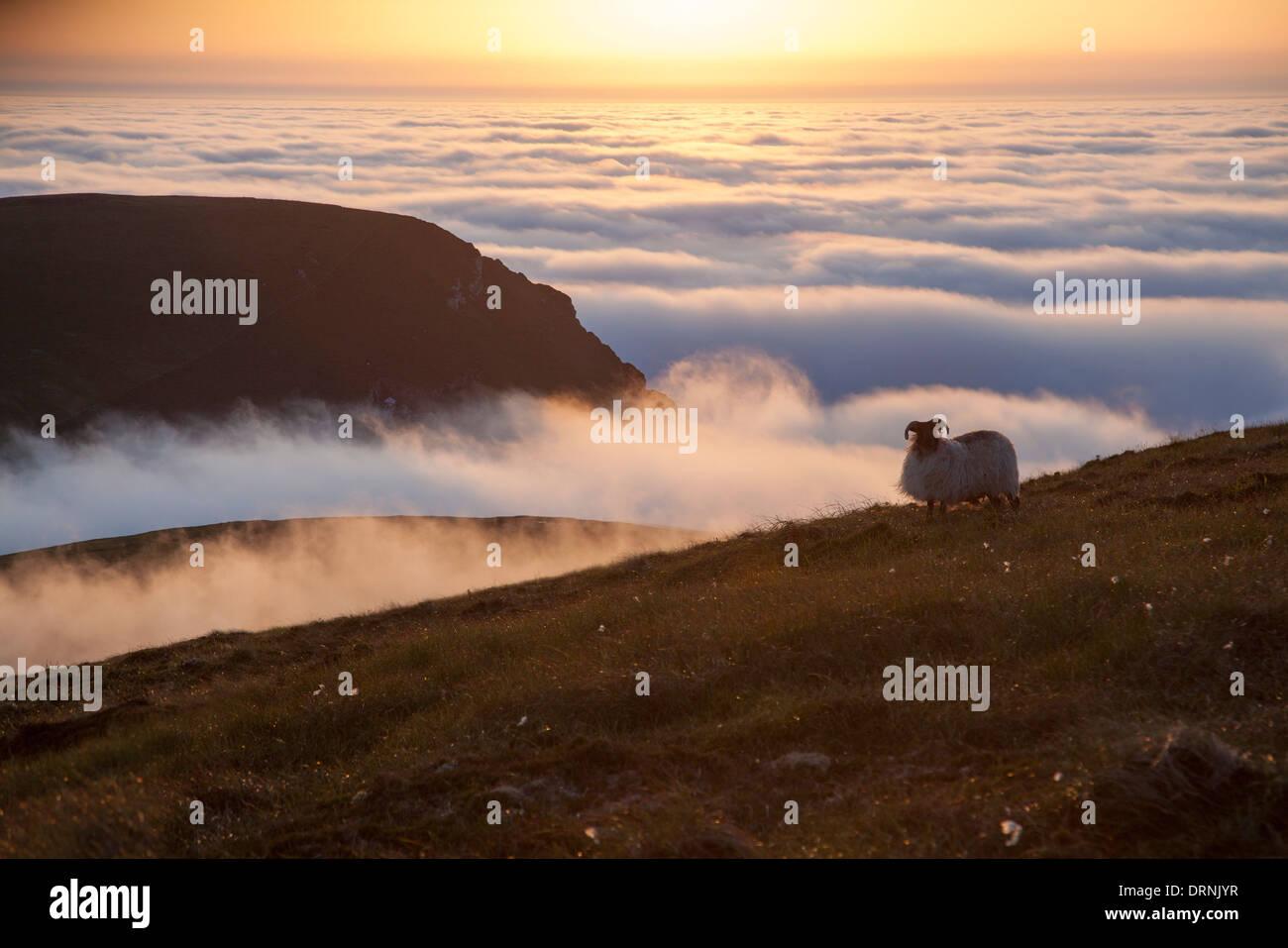 Nuvole al tramonto e pecore, Glinsk montagna, North Mayo seacliffs, County Mayo, Irlanda. Immagini Stock