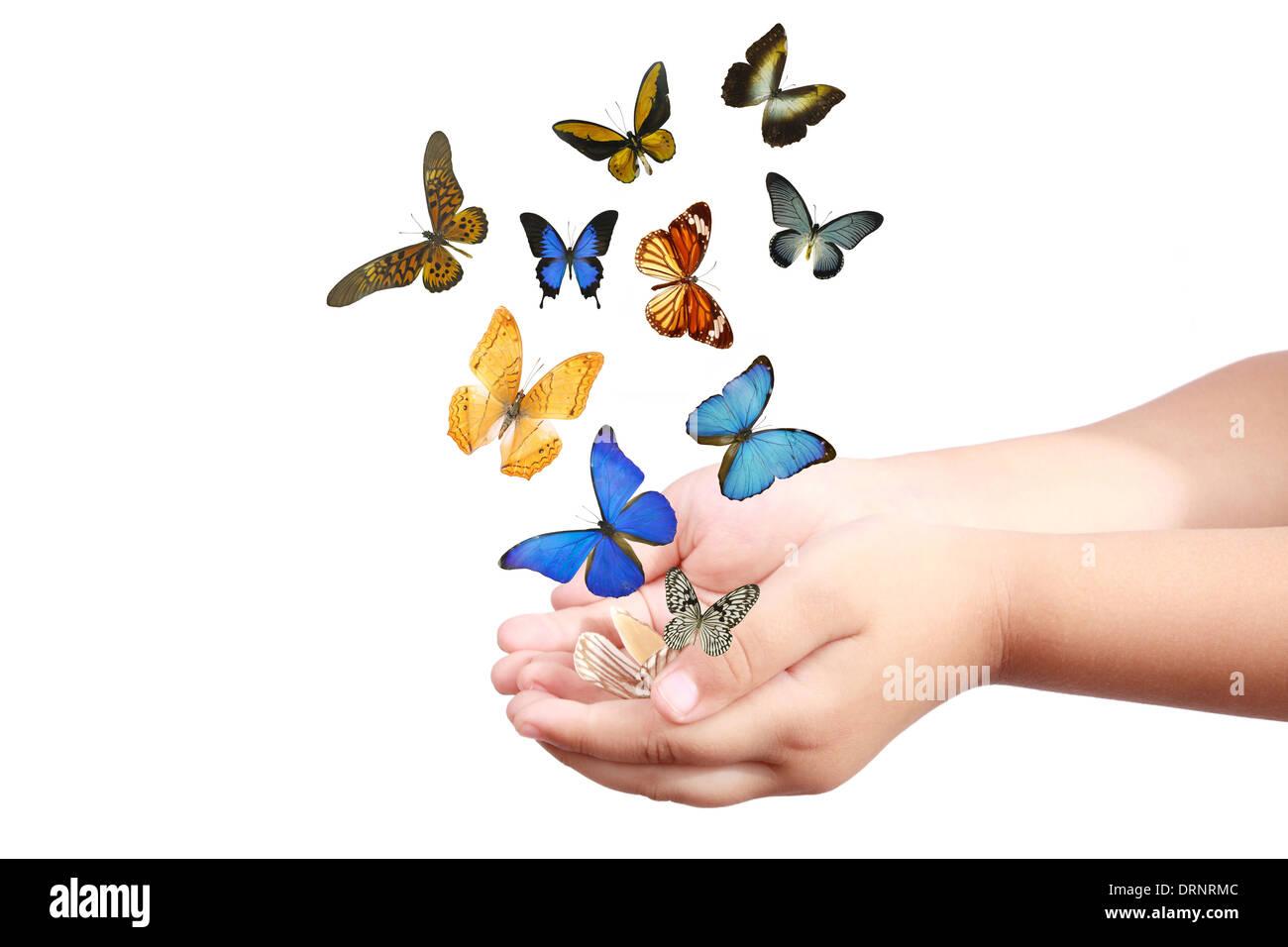 Bambino la mano rilasciando le farfalle Immagini Stock