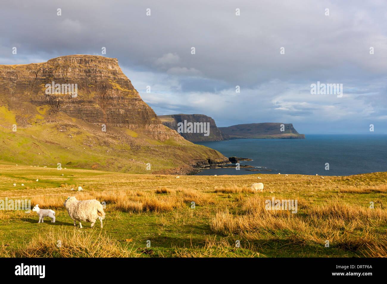 Una vista verso Waterstein Testa e scogliere Ramasaig, Moonen Bay, Isola di Skye, Ebridi Interne, Scozia, Regno Unito, Europa. Foto Stock