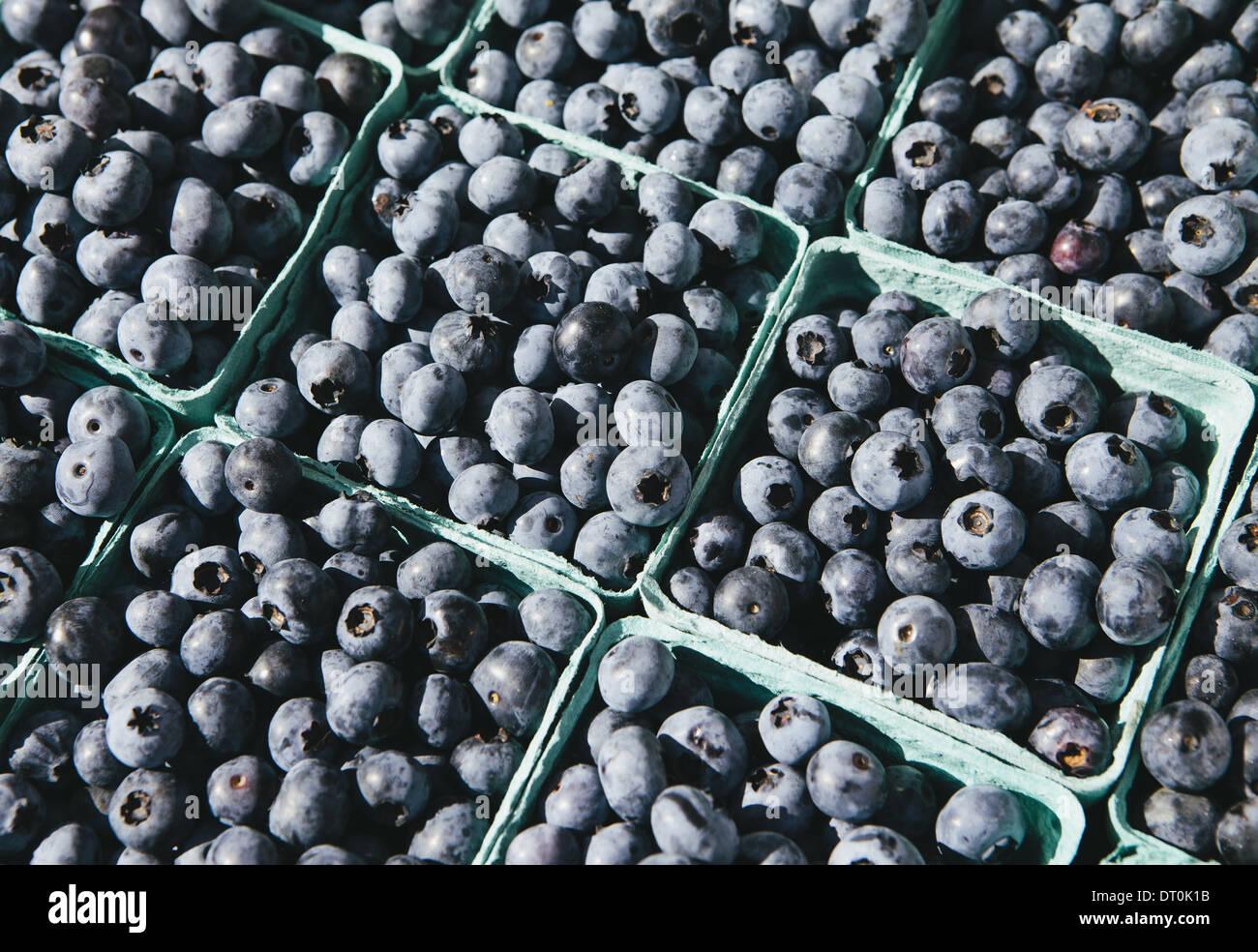 Seattle Washington USA Scatole di mirtilli organico farmers market Immagini Stock