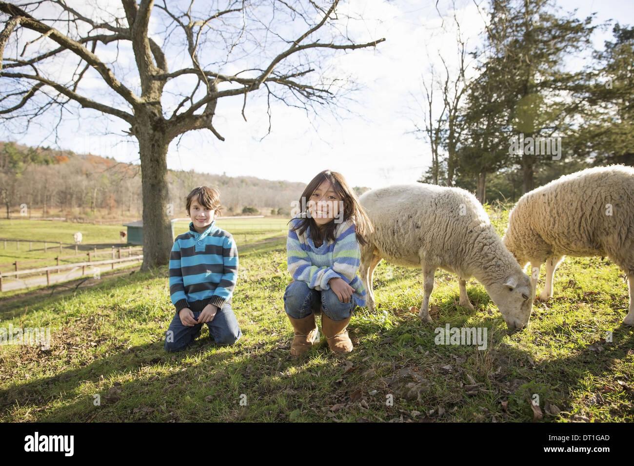 Due bambini in un animale santuario in un paddock con pecora Immagini Stock