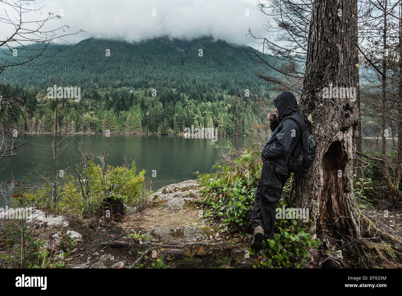 Uomo che indossa gli indumenti impermeabili per albero, Lago Buntzen, British Columbia, Canada Immagini Stock