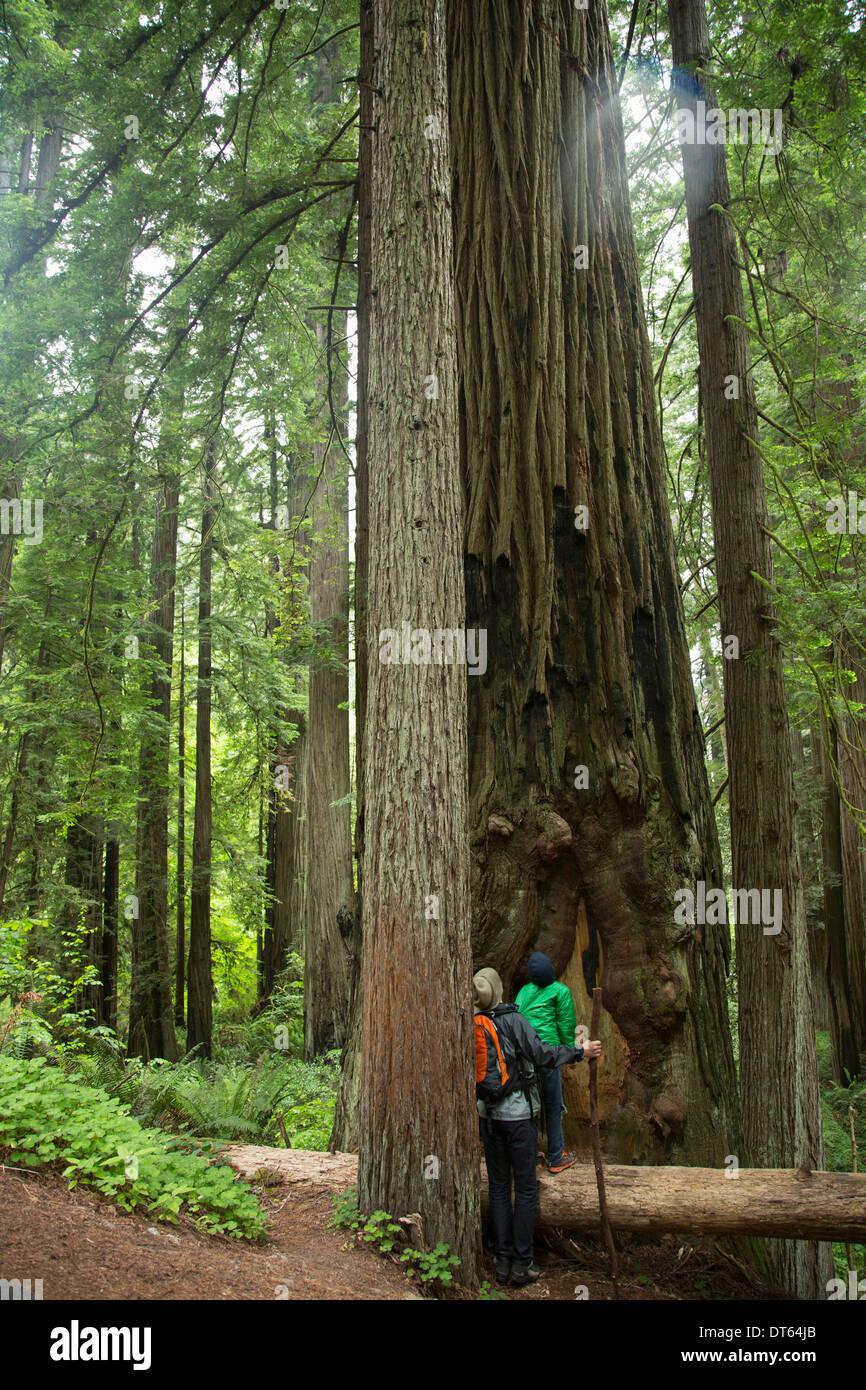 Padre e figlio in Redwoods National Park, California, Stati Uniti d'America Foto Stock