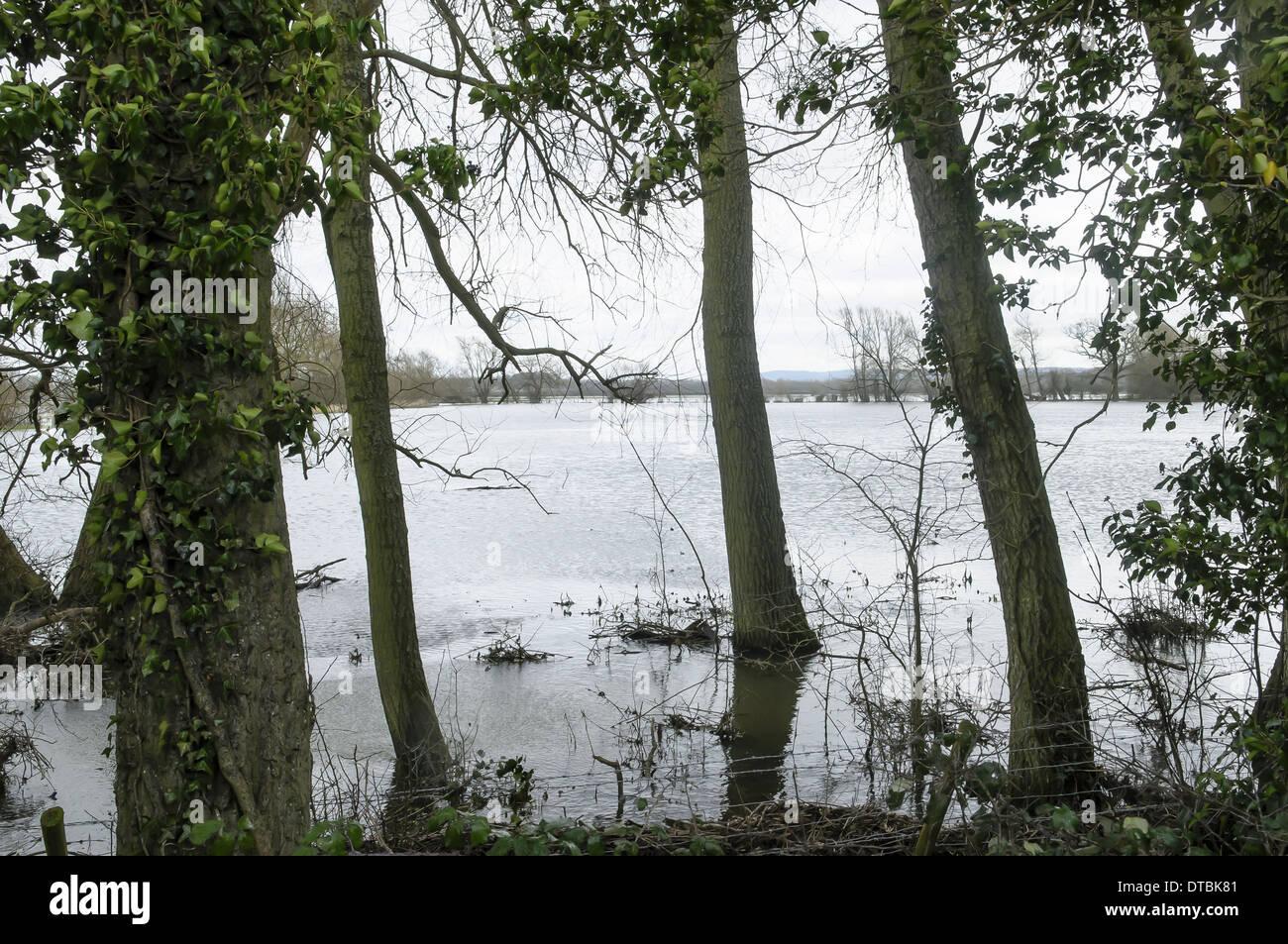 Campo inondato con terreni coltivati e recinzioni e alberi di subacquea saturo di acqua radici Immagini Stock