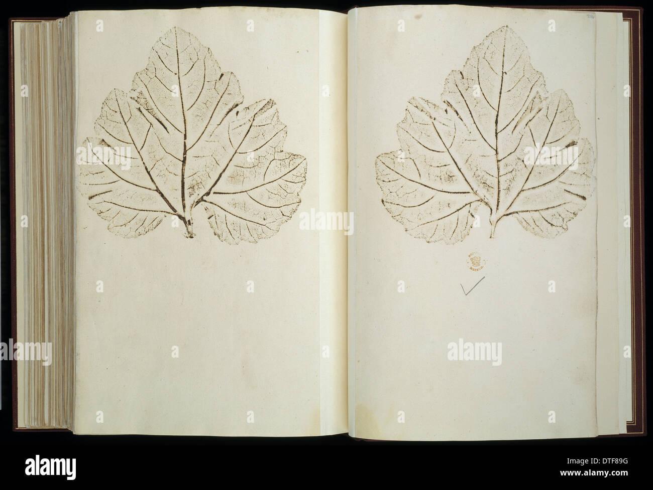 Illustrazione di piante Immagini Stock