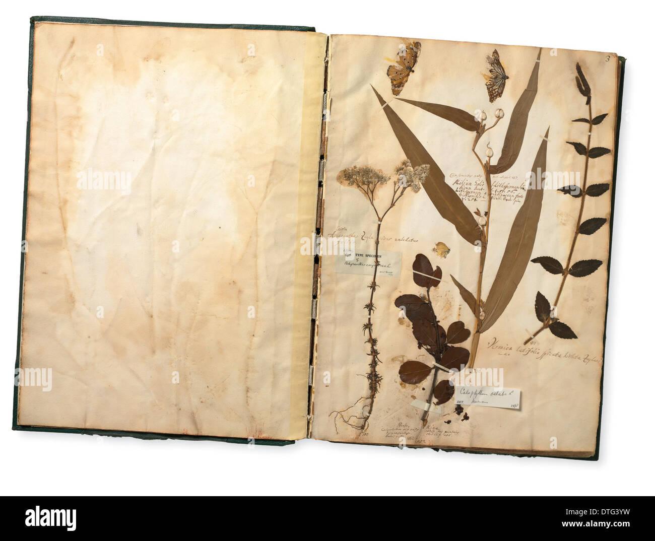 Esemplari (comprese le farfalle) da Paolo collezione Hermann Immagini Stock